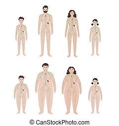 übergewichtige , system, koerper, lymphatisch