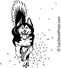 alaskisch malamute, rasse, hund, vektor
