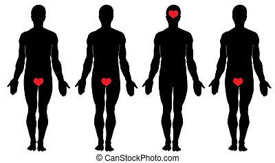 Anatomie der Liebe