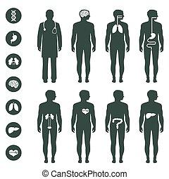 Anatomie des menschlichen Körpers.