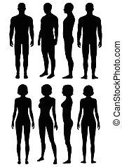 Anatomie des menschlichen Körpers, vorne, hinten, Seitenansicht,