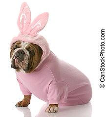angezogene , kaninchen, ostern, hund, auf