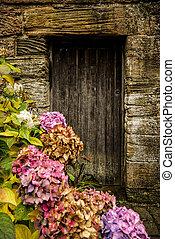 Antike Holztür und Hortensie