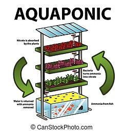 Aquaponisches System.