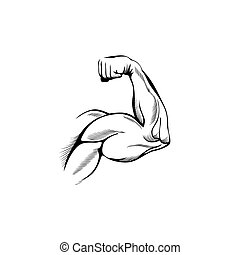 Armmuskeln