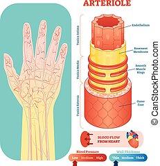 Arteriole anatomische Vektorgrafikkreuzung. Kreislaufsystem Blutgefäßdiagramm auf menschlicher Hand Silhouette. Medizinische Informationen.