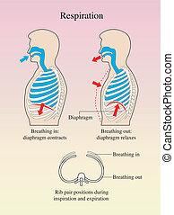 atmung