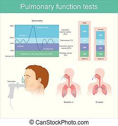 ausatmen, fully., pruefen, luft, atmen, funktion, lungen, tests., lungen, volumen, während