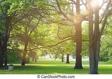 Bäume in einem Sommerwald.