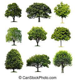 bäume, sammlung