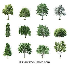 bäume., vektor, satz