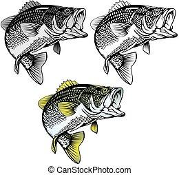 baß, freigestellt, fische