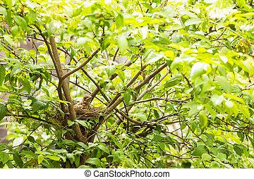 Babyvogel in einem Nest auf dem Baum.