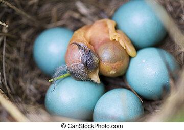 Babyvogel in einem Nest