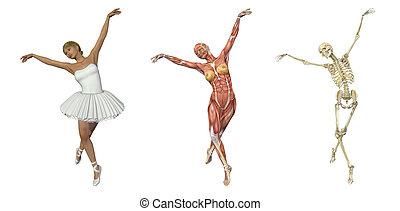 ballett, overlays, -, anatomisch