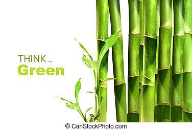 Bambus schießt Seite an Seite