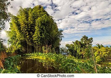 Bambuswald erleuchtet durch Morgenlicht