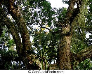 Baum im amazonischen Regenwald