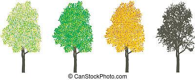 Baum in vier Jahreszeiten