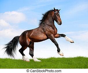 Bay Horse galops in Feld.