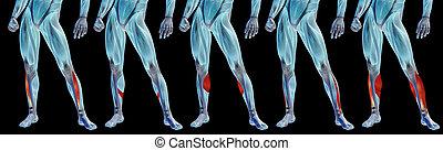 bein, schwarz, anatomisch, oder, senken, freigestellt, menschliche , satz, sammlung, 3d, muskel, koerperbau, hintergrund