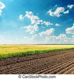 blaues, felder, himmelsgewölbe, tief, bewölkt , unter, landwirtschaft
