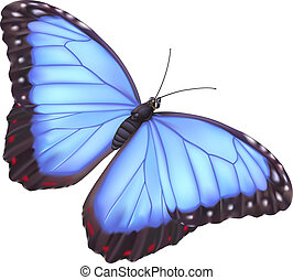 blaues, papillon, morpho