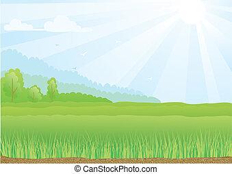 blaues, strahlen, sky., sonnenschein, abbildung, feld, grün