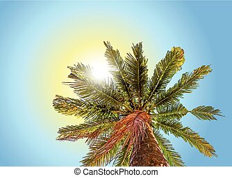 Blick auf eine wunderschöne Palme mit blauem sonnigen Himmel