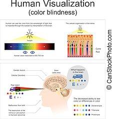 blindness., menschliche , vergegenwärtigung, farbe
