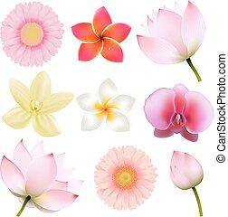 Blumensammlung.