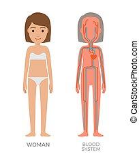 Blutfrauensystem lehrreiche Vektorgrafik.