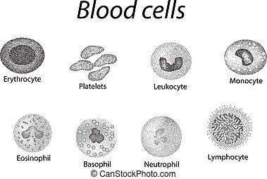 Blutzellen. Ein Satz monochromer Zellen. Rote Blutzellen, Blutplättchen, Leukozyten, Lymphozyten, Eosinophilen, Neutrophilen, Basilikum, Monozyten. Infographics. Vector Illustration auf isoliertem Hintergrund