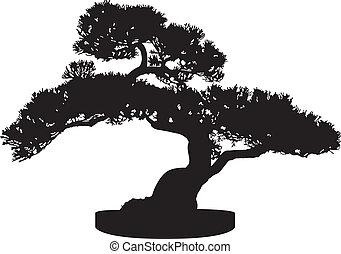 bonsai baum, silhouette