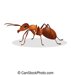 Braune Ameise auf weiß. Icon aktivieren. Termite.
