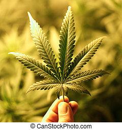 Cannabis Hintergrund