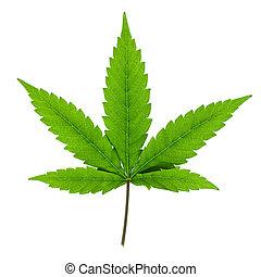Cannabisblatt isoliert auf weißem Hintergrund.