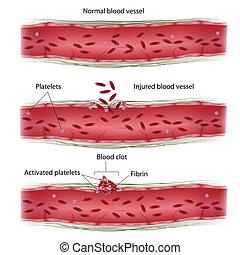 clotting, prozess, blut, eps8