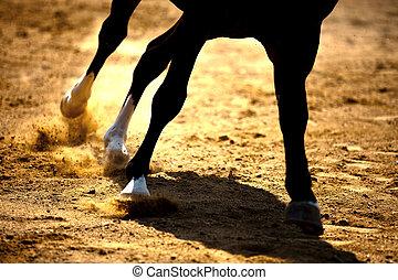 Das Pferd galoppiert auf dem Sand