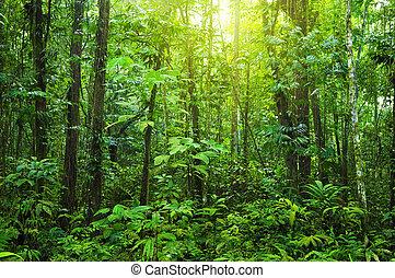 Denen Wald.