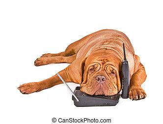 Der Hund hat genug von Anrufen