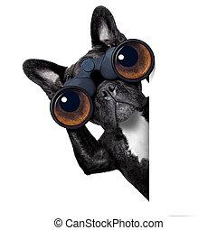 Der Hund schaut durch Fernglas.