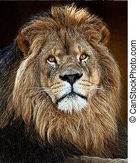 Der Löwe King3