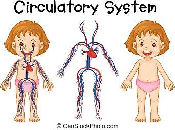 Diagramm von Mädchen mit Kreislaufsystem.