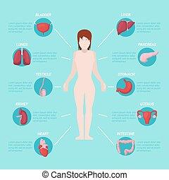 Die Anatomie des menschlichen Körpers mit inneren Organen. Vector Illustration
