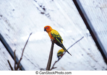 Die gelbe Papageiensonne auf dem Ast.