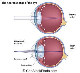 Die nahe Reaktion des Auges, eps8.