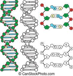 DNA-Helix-Molekülmodell