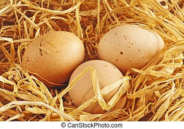Ei in einem Nest