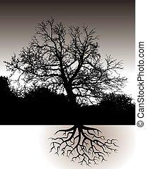 Ein Baum mit Wurzeln.